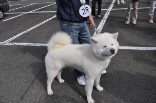 秋田犬1 031.JPG